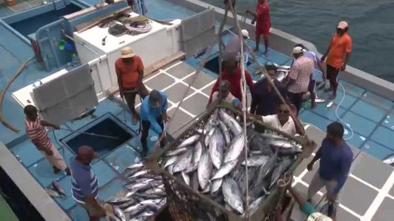 Đại dương đang dần cạn kiệt tôm cá