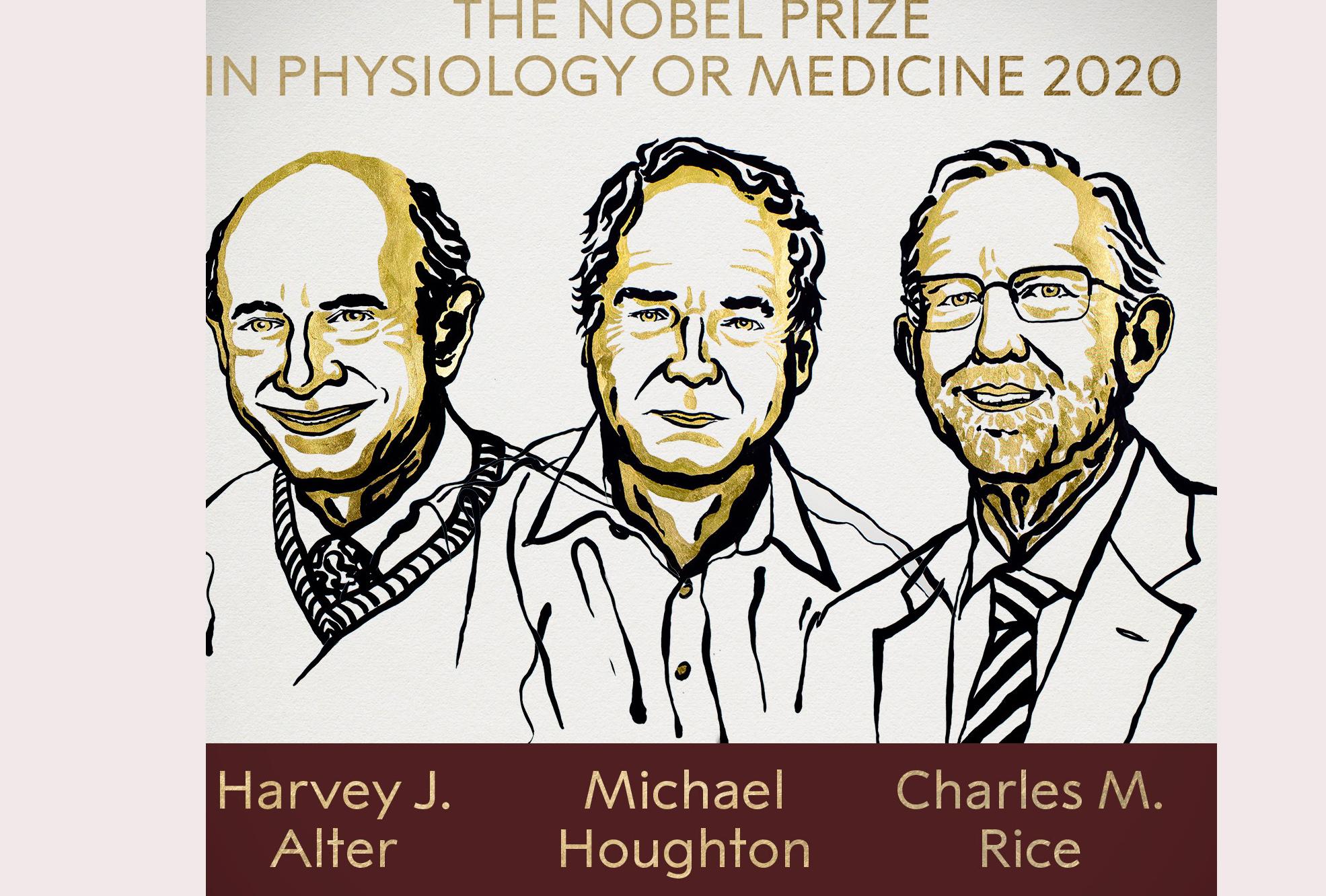 Giải Nobel Y Học 2020 cho thành tựu quan trọng về virus viêm gan C